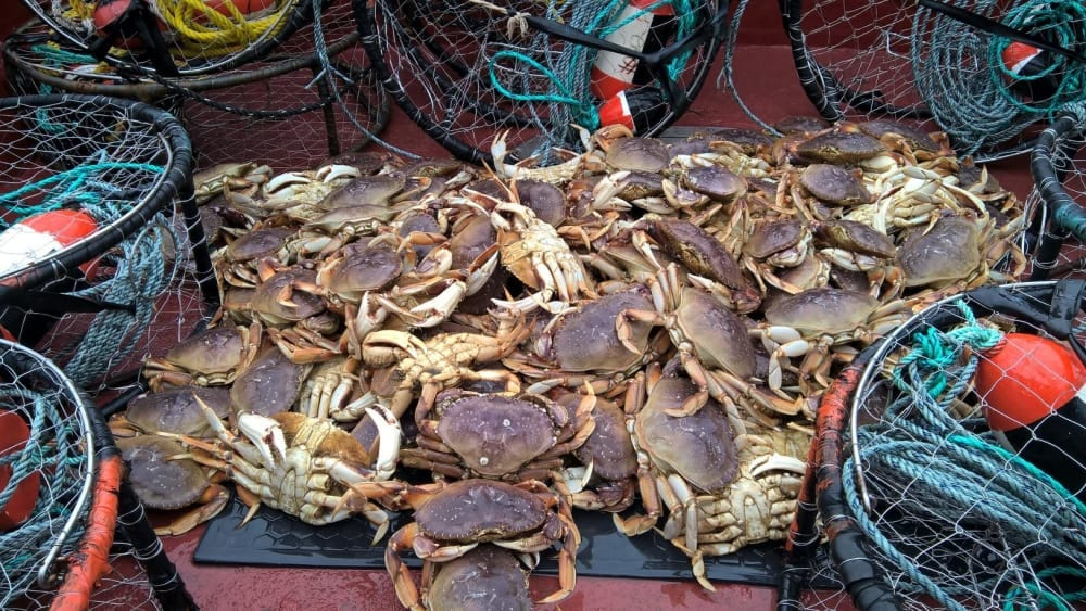 crabs and crab traps